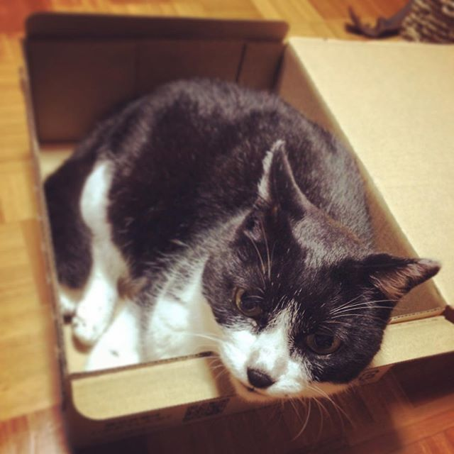 Amazonからのお届けもの。From Amazon.co.jp#cat#blackandwhitecat#animal#catsofinstagram#instacat#catinsta#chat#gatto#pet#catstagram#catlovers#ネコ#猫#ねこ#白黒猫#猫部#catoftheday#ilovecat#beautifulcat