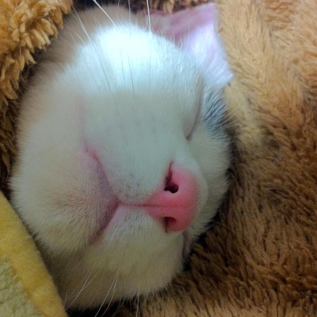 眠れる猫のハチ