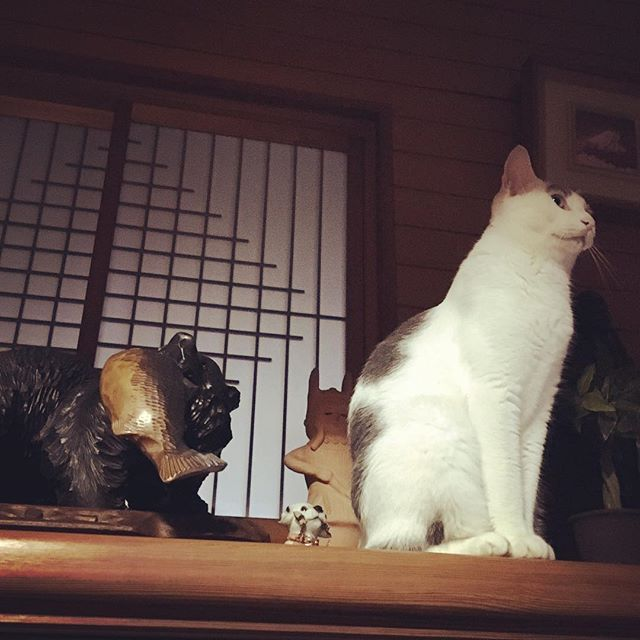 玄関の置き物。小っちゃい犬とシンクロするハチ。Objet on the shoe cupboard. The cat synchronize to the small dog! #cat#blackandwhitecat#animal#catsofinstagram#instacat#catinsta#chat#gatto#pet#catstagram#catlovers#ネコ#猫#ねこ#白黒猫#猫部#catoftheday#ilovecat#beautifulcat
