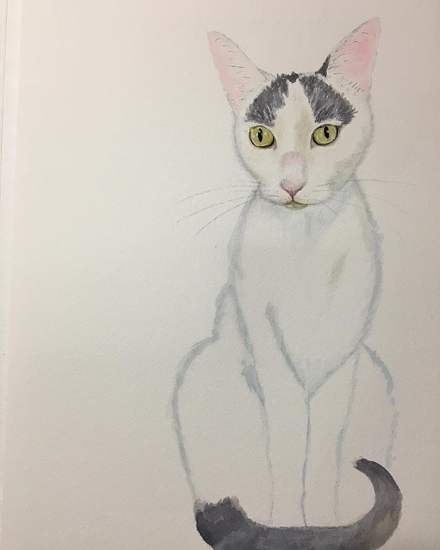 Portrait of Hachi️