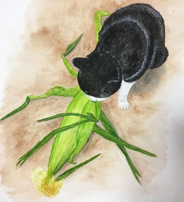 『片品村のとうもろこしと猫』🐈コビちゃんは、とうもろこしが大好き。毎年送ってもらう片品村のとうもろこしは、甘くてとても美味しい!Corn and cat. 🐈#catoftheday#ilovecat#beautifulcatcat#blackandwhitecat#animal#catsofinstagram#instacat#catinsta#chat#gatto#pet#catstagram#catlovers#猫#ねこ#白黒猫#猫部#watercolor #painting #水彩画 #片品村#とうもろこし