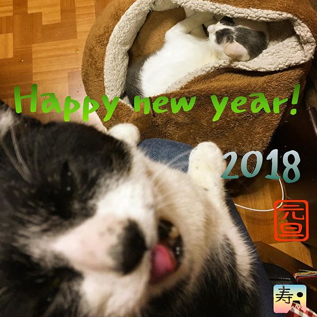 あけましておめでとうございます!Happy new year! #catoftheday#ilovecat#beautifulcatcat#blackandwhitecat#animal#catsofinstagram#instacat#catinsta#chat#gatto#pet#catstagram#catlovers#猫#ねこ#白黒猫#猫部#はちわれ