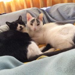 ハチとコビー Hachi & Coby の 猫ブログ